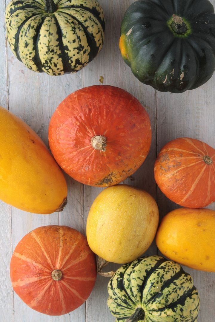 Squashes and pumpkin - The Proud Italian