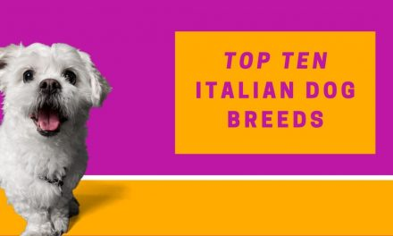 Top Ten Italian Dog Breeds