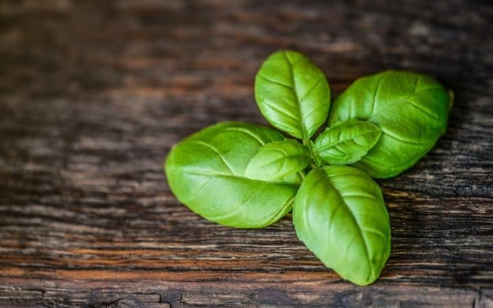 Basil, How to Grow Basil Indoors - The Proud Italian