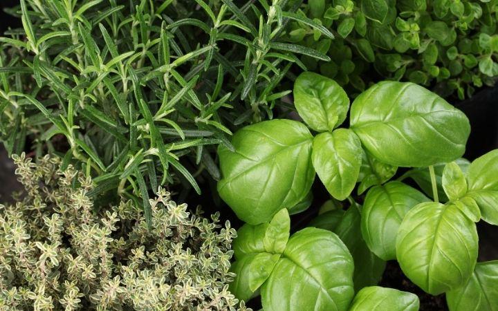 Oregano, rosemary, basil and thyme, How To Make Italian Seasoning - The Proud Italian