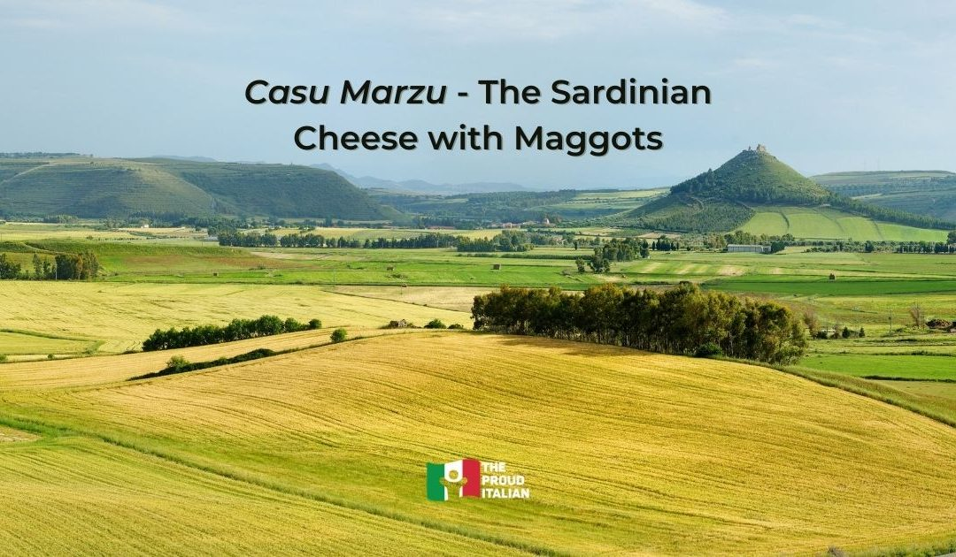 Casu Marzu – The Sardinian Cheese with Maggots