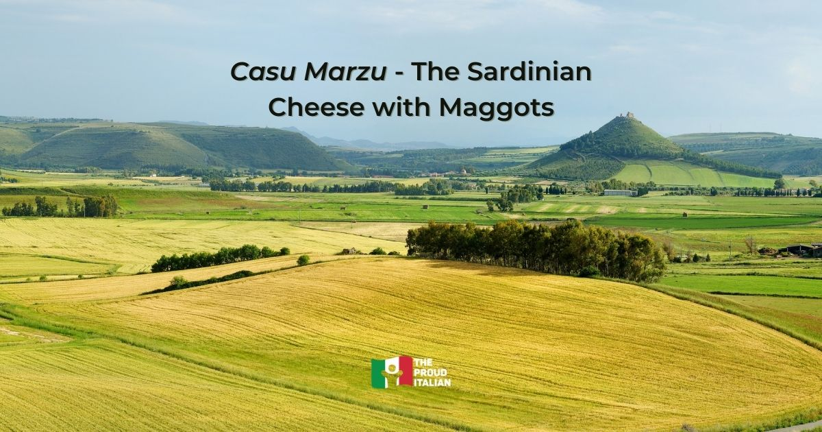 Casu Marzu – The Sardinian Cheese with Maggots