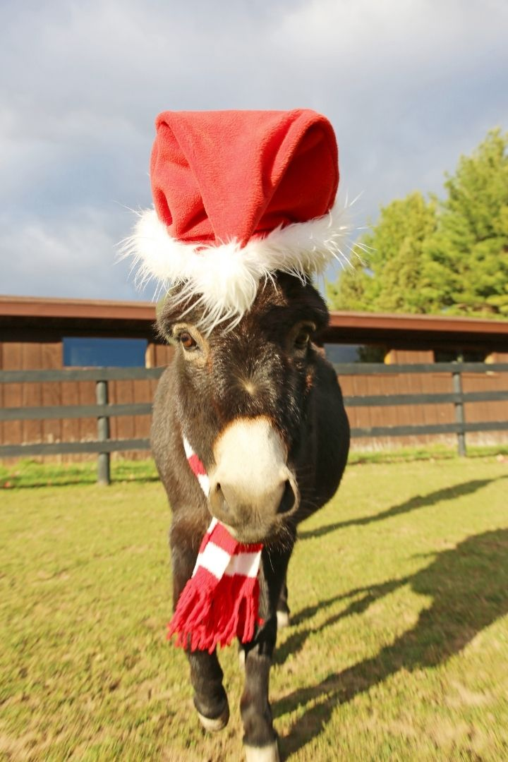 Dominick the Donkey with Christmas hat and scarf - The Proud Italian