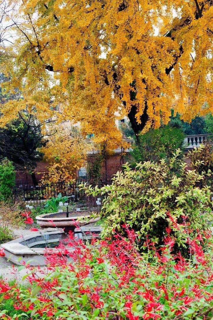 Giardino Botanico, Padova, The Top 10 Italian Gardens to Visit on your Next Trip - The Proud Italian