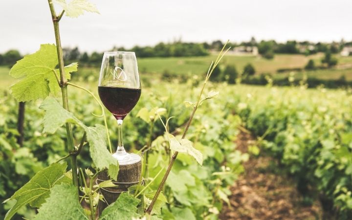 Glass of wine and vineyard, Mi Scusi! Free Wine Fountain in Italy - The Proud Italian