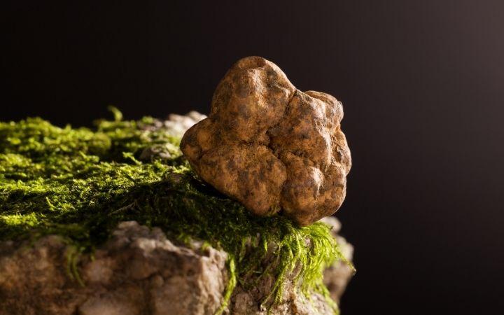 Fresh white truffle, Cooking With Fresh White Truffles - The Proud Italian