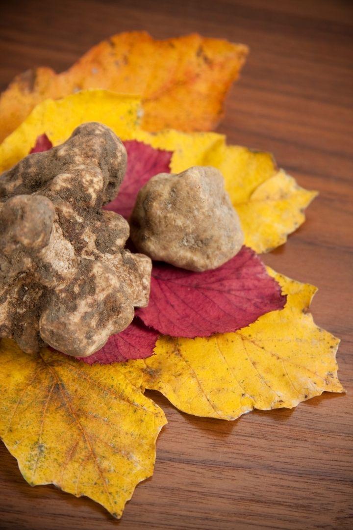 White Truffles, Cooking With Fresh White Truffles - The Proud Italian
