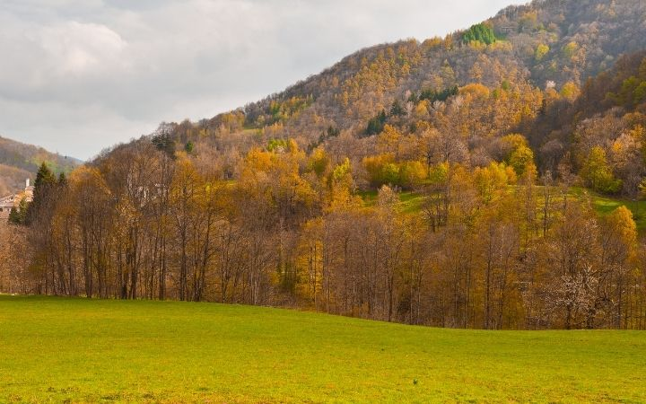 Piedmont nature, field with wood in the background in the hills - The Proud Italian