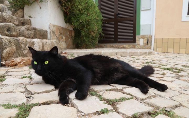 Black cat on the street - The Proud Italian
