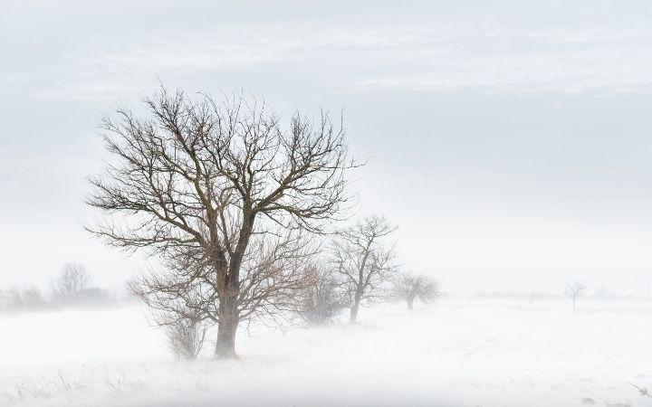 Winter blizzard and trees in the field - The Proud Italian